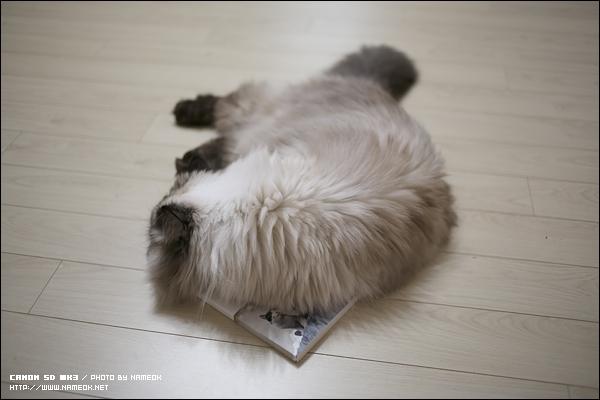 봉봉이는 책을 보다 울다 잠들고..