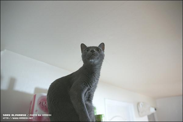 흑- 이제 전 삐급 고양이인거임?