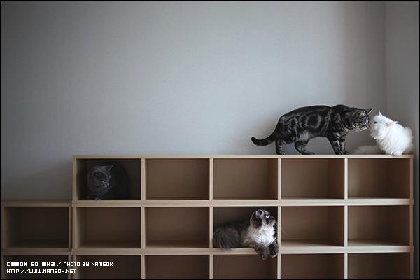 고양이 보관함 - 총 26묘 수납 가능
